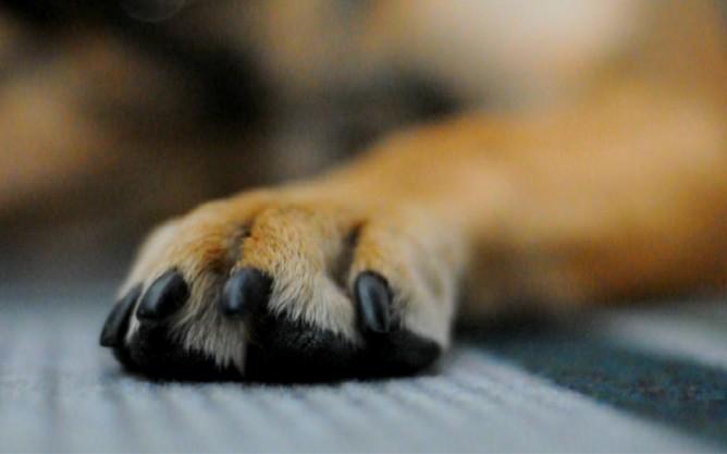 σκύλος alzheimer παθαίνει ο σκύλος alzheimer alzheimer