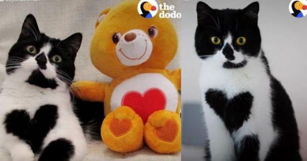 Αυτή η γάτα έχει… μεγάλη καρδιά!