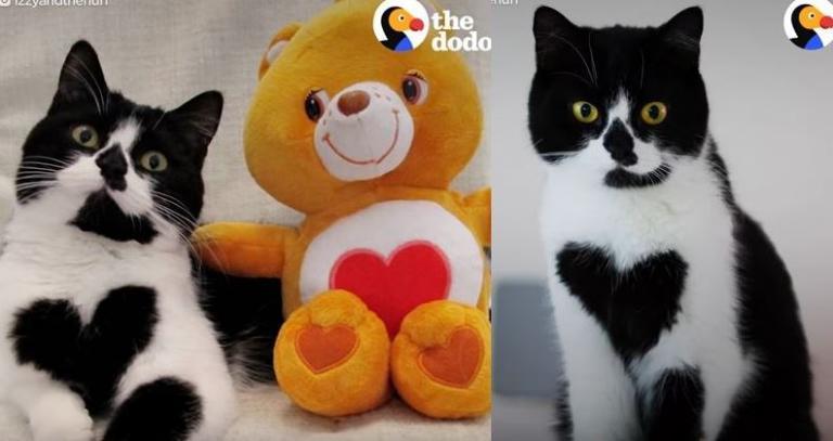 γάτα καρδιά Γάτα