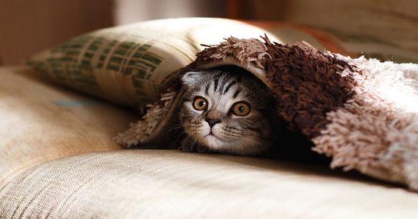 Γάτες και δημόσια υγεία: Mύθοι και πραγματικότητες