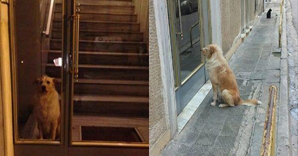 Ο Χάτσικο από το Κουκάκι: Πέθανε ο ιδιοκτήτης του και ο σκύλος τον περίμενε έξω από την πόρτα, Η πίστη του ζώου έχει προκαλέσει ρίγη συγκίνησης!