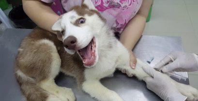 Η πρώτη επίσκεψη στον κτηνίατρο
