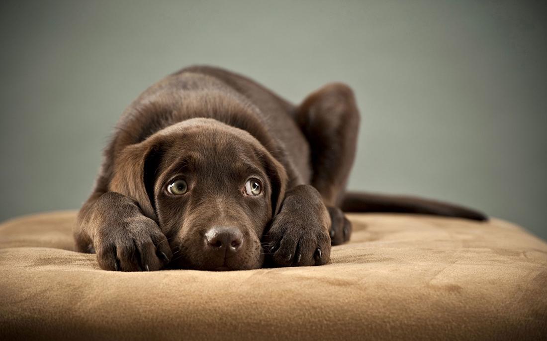 Σκύλος εμετός