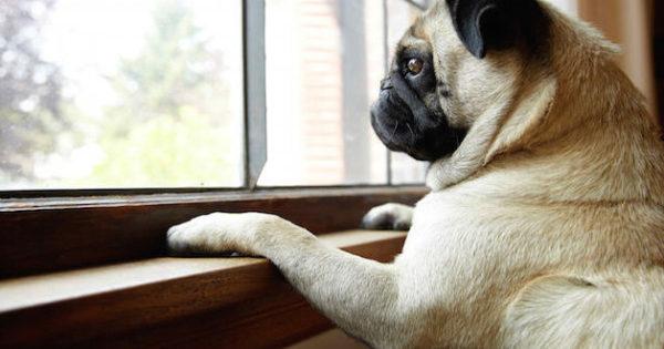 Σκύλος μόνος στο σπίτι…Κάνε την απουσία σου πιο ανώδυνη!