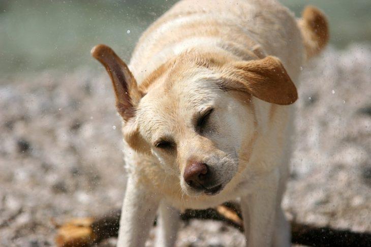 τρέμουλο σκύλου τρέμει ο σκύλος μου τι να κάνω τρέμει ο σκύλος σκύλος τρέμουλο αιτίες σκύλος τρέμουλο Σκύλος