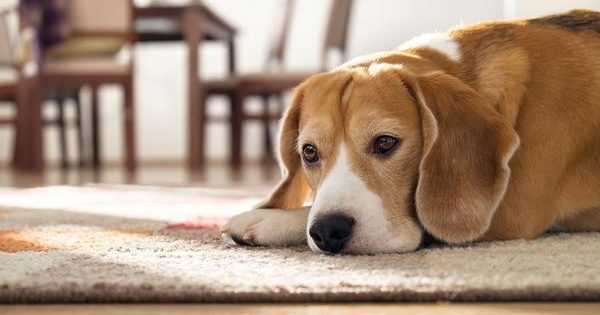 Μην κάνεις τον σκύλο σου να νιώθει ανεπιθύμητος!