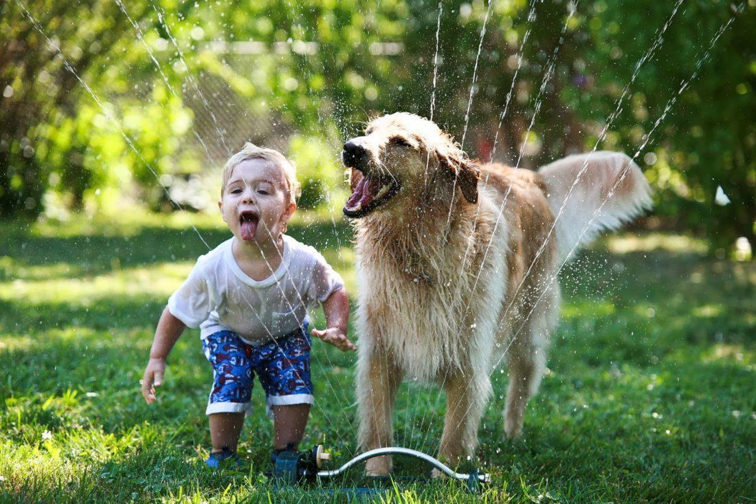 σκύλος εγκυμοσύνη καταλαβαίνει ο σκύλος την εγκυμοσύνη