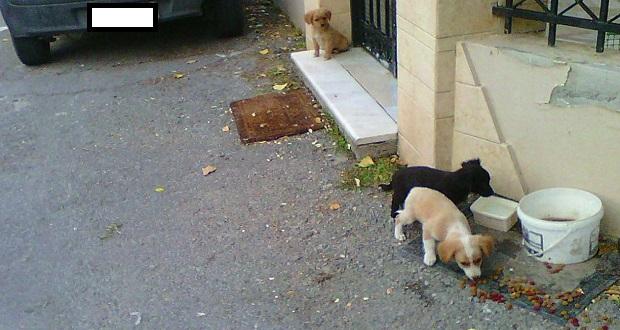 πέταξαν τα σκυλιά στο δρόμο