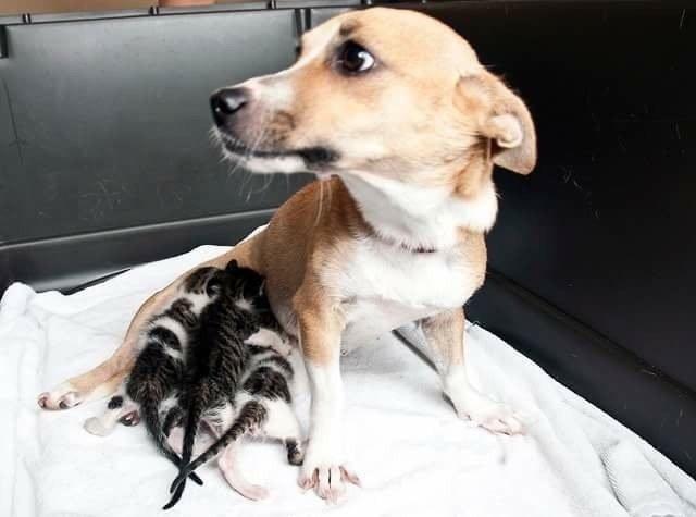 σκυλίτσα κουταβάκια γατάκια