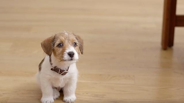 σπίτι σκύλος μόνος στο σπίτι αφήνω τον σκύλο μόνο στο σπίτι