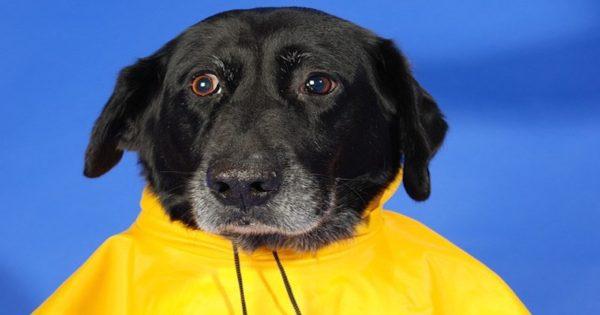Πότε ένας σκύλος θεωρείται ηλικιωμένος;