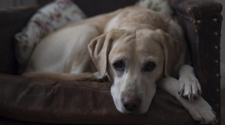 τι φοβάται ο σκύλος σκύλος φοβαται το σκοτάδι Σκύλος σκοτάδι σκύλος