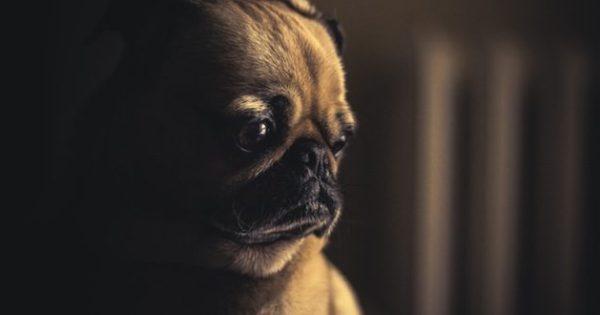 Μπορεί ο σκύλος σου να φοβάται το σκοτάδι;