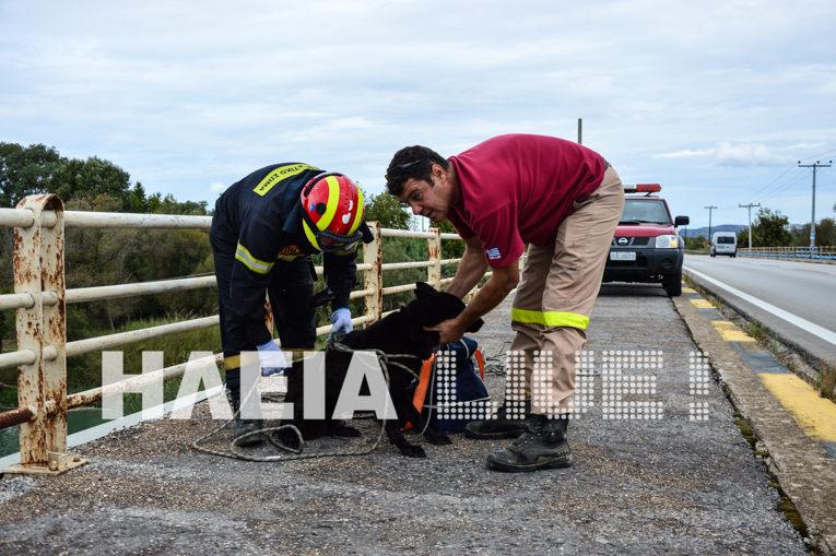 Σκύλος πυροσβεστική Πύργος Ηλείας διάσωση σκύλου