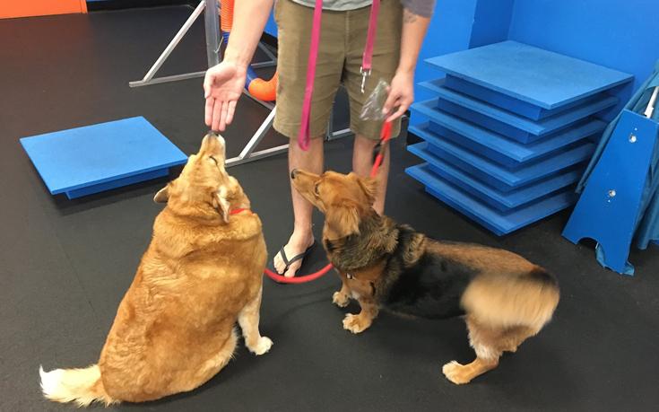 σκύλος διατροφή σκύλος δίαιτα σκύλος γυμναστική