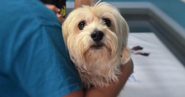 Δωρεάν εμβολιασμός, στείρωση και ηλεκτρονική καταγραφή αδέσποτων ζώων στο Δήμο Βόλβης