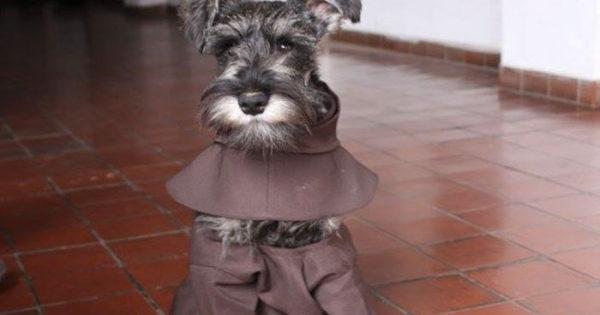 Αυτό το μοναστήρι υιοθέτησε έναν αδέσποτο σκύλο και πλέον απολαμβάνει την ζωή του ως μοναχός!