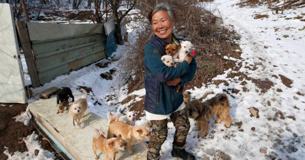 Γυναίκα από την Νότια Κορέα μεγαλώνει τα 200 σκυλιά που έσωσε από τον θάνατο