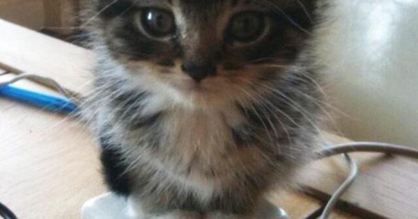 Γατάκια που θα κάνουν τα πάντα για να ζεσταθούν (40+pics)