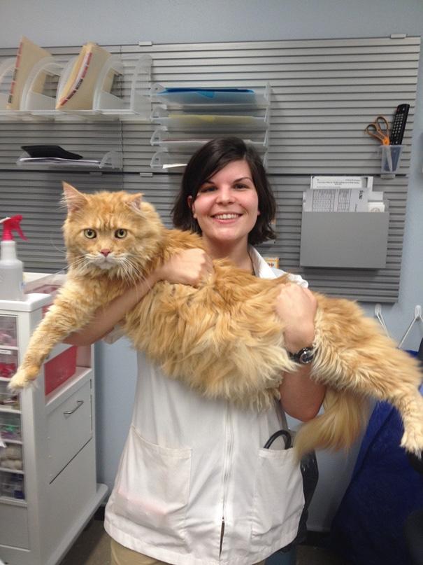 πλεονέκτηματα κτηνιάτρου πλεονέκτημα του να είσαι κτηνίατρος κτηνιατρείο