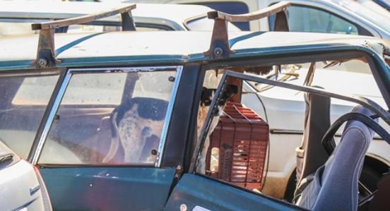 Σκυλί περιμένει για μήνες στο κατεστραμμένο αυτοκίνητο όπου ο ιδιοκτήτης του πέθανε