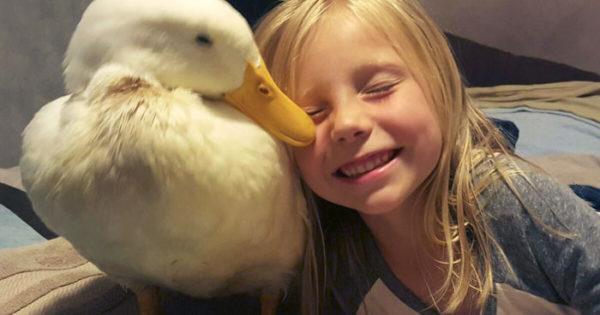 Πεντάχρονο κοριτσάκι έχει για φίλο μια πάπια που την ακολουθάει παντού