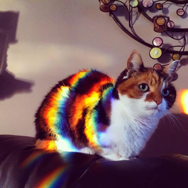 φωτογραφίες με γατάκια γάτες φωτογραφίες γάτες γατάκια φωτογραφίες γατάκια προσπαθούν να ζεσταθούν γατάκια κρυώνουν γατάκια γάτα φωτογραφίες Γάτα