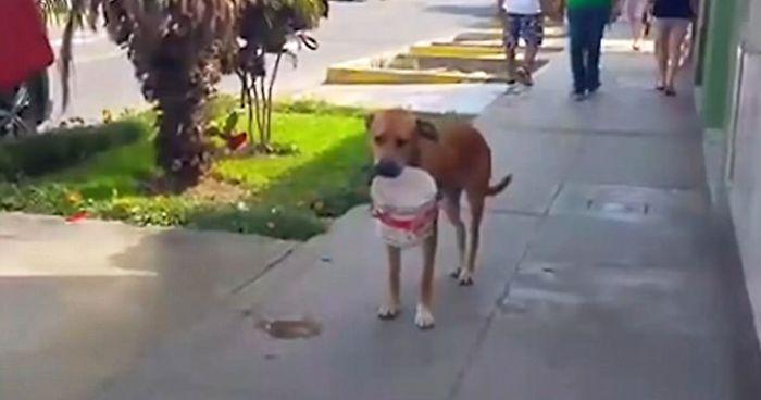 Σκύλος Περού
