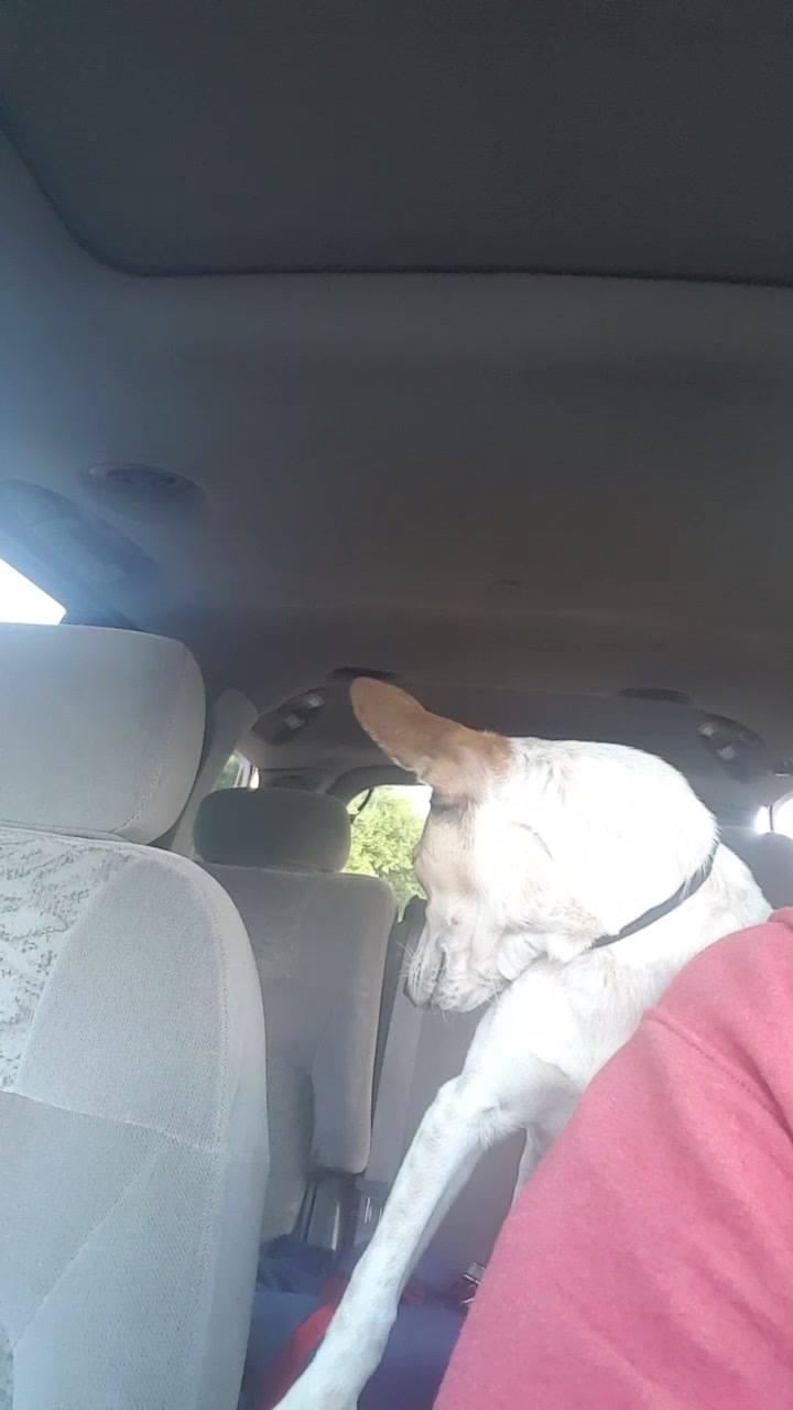 Σκύλος αδέσποτο Αδέσποτα
