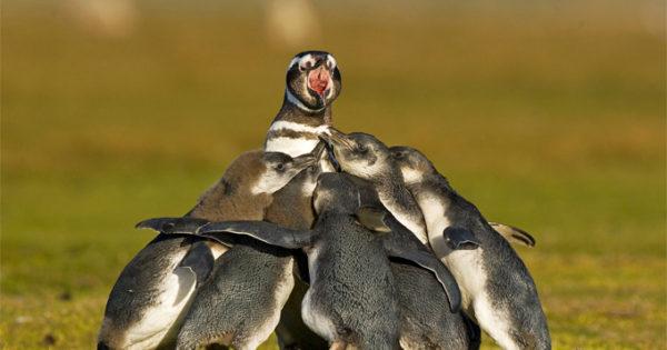 10 ζώα που κινδυνεύουν με εξαφάνιση!