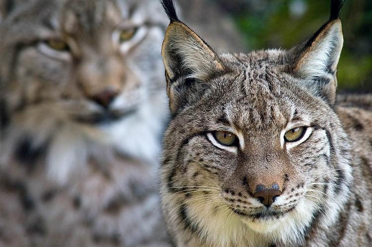 ζώα υπό εξαφάνιση