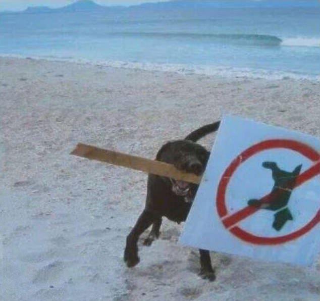 ζώα και κανόνες ζώα