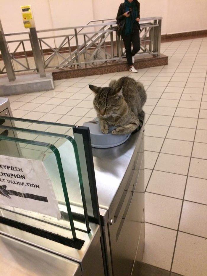 μοναστηράκι γάτος Γάτα