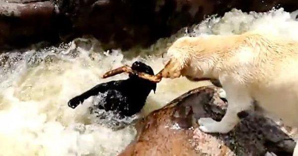 Σκύλος διασώζει έναν τετράποδο φίλο του