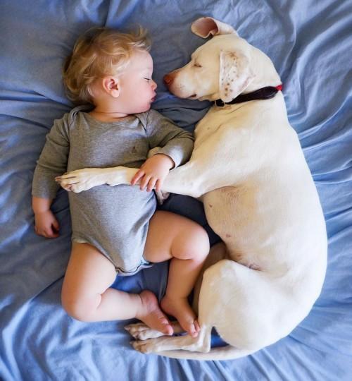 μωρό και σκύλος