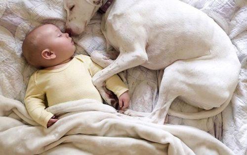 Νόρα: Η κακοποιημένη σκυλίτσα που έτρεμε τους πάντες εκτός από το μωρό αυτό