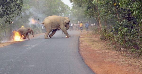 «Η κόλαση είναι εδώ» – Η συγκλονιστική φωτογραφία που καταγράφει τον τρόμο των ελεφάντων