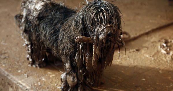 Ο σκύλος-επιζών στη Μάνδρα: Λασπωμένος αλλά ζωντανός και αυτό γιατί δεν τον εγκατέλειψαν