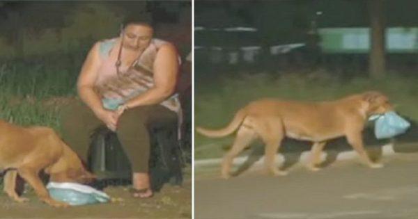 Γυναίκα ακολούθησε σκύλο για να δει που πήγαινε το φαγητό που του έδινε και πήρε ένα μεγάλο μάθημα ανθρωπιάς