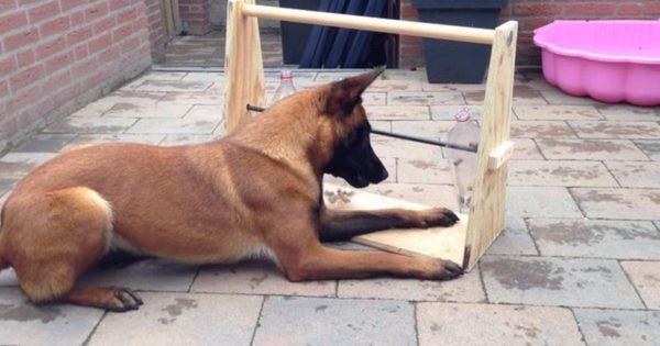 Με αυτό το απλό κολπάκι, θα κρατήσετε το σκύλο σας απασχολημένο για ώρες
