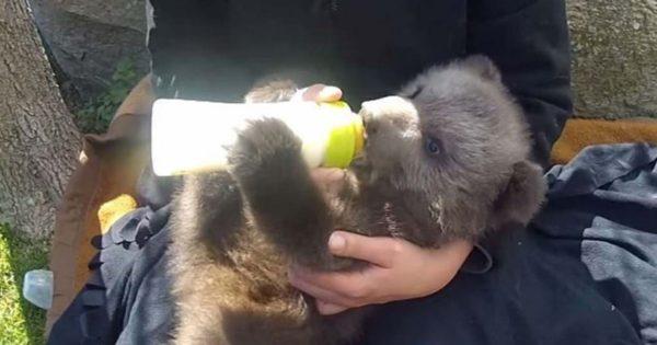 Γνωρίστε το αρκουδάκι που έχασε τη μητέρα και θα μεγαλώσει από τον ΑΡΚΤΟΥΡΟ