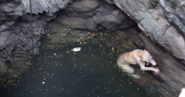 [ΒΙΝΤΕΟ] Έσωσαν σκύλο παγιδευμένο σε πηγάδι