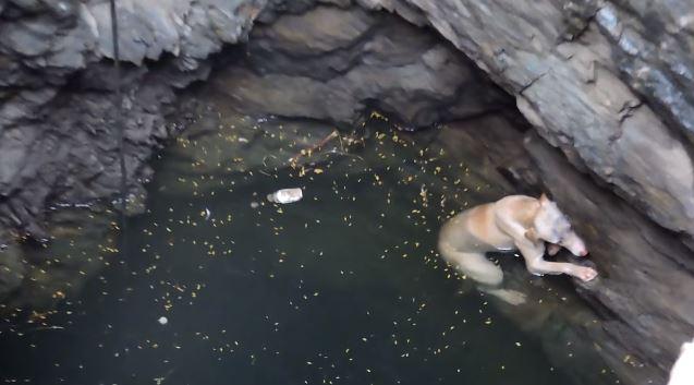σκύλος παγιδευμένος σε πηγάδι σκύλος παγιδευμένος