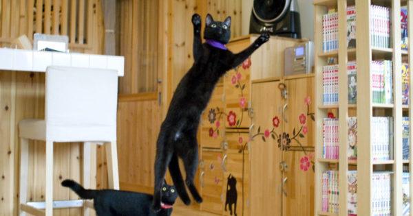 Μια επίσκεψη στο μοναδικό καφέ του κόσμου που είναι αφιερωμένο στις μαύρες γάτες