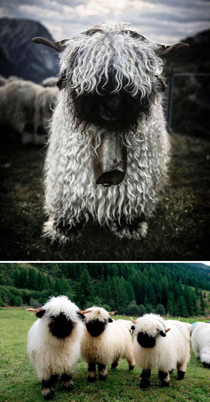 ζωάκια φωτογραφίες ζωάκια