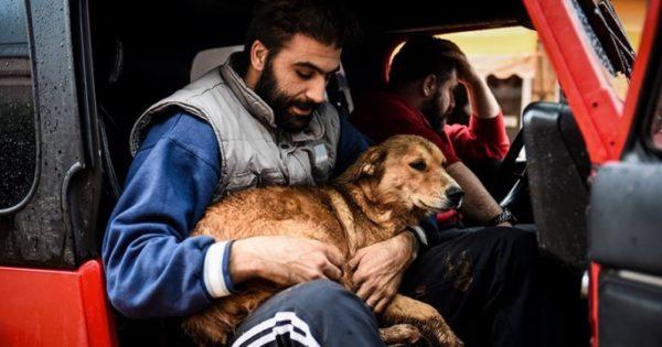 Έκκληση βοήθειας για τ' αδέσποτα ζώα που χτυπήθηκαν από τη θεομηνία στην Μάνδρα Αττικής
