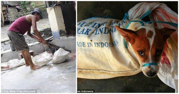 Κάποιος να το κλείσει το κολαστήριο – Κουτάβι κοιτάζει έντρομο τα άλλα σκυλιά να αποκεφαλίζονται σε σφαγείο σκύλων στην Ινδονησία