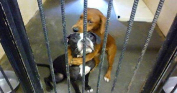 Λίγο πριν τους κάνουν ευθανασία αυτά τα σκυλιά αγκαλιάστηκαν και σώθηκαν το τελευταίο λεπτό