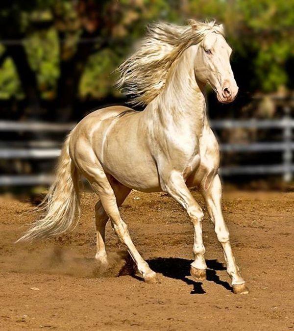 άλογο