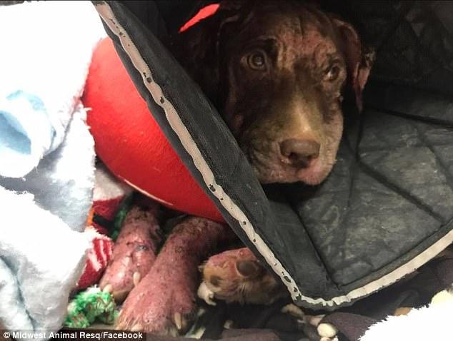 υποσιτισμός σκύλου Σκύλος κακοποίηση σκύλου